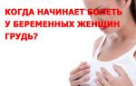 По каким причинам и когда начинает болеть у беременных женщин грудь, как долго это происходит?