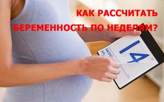 Как правильно рассчитать беременность по неделям, уточнить дату родов, пол ребенка?