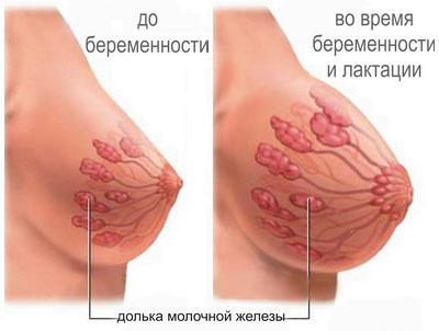 Изменения в груди при беременночти