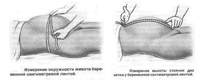 измерение живота беременной